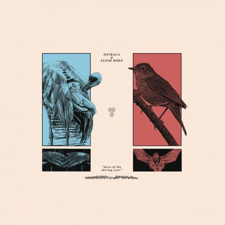 OSTRACA / FLESH BORN - Split 12''