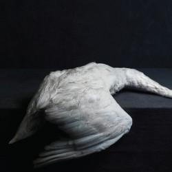 AMENRA - Mass VI (White) DoLP