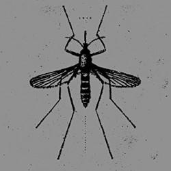 ISIS - Mosquito Control LP